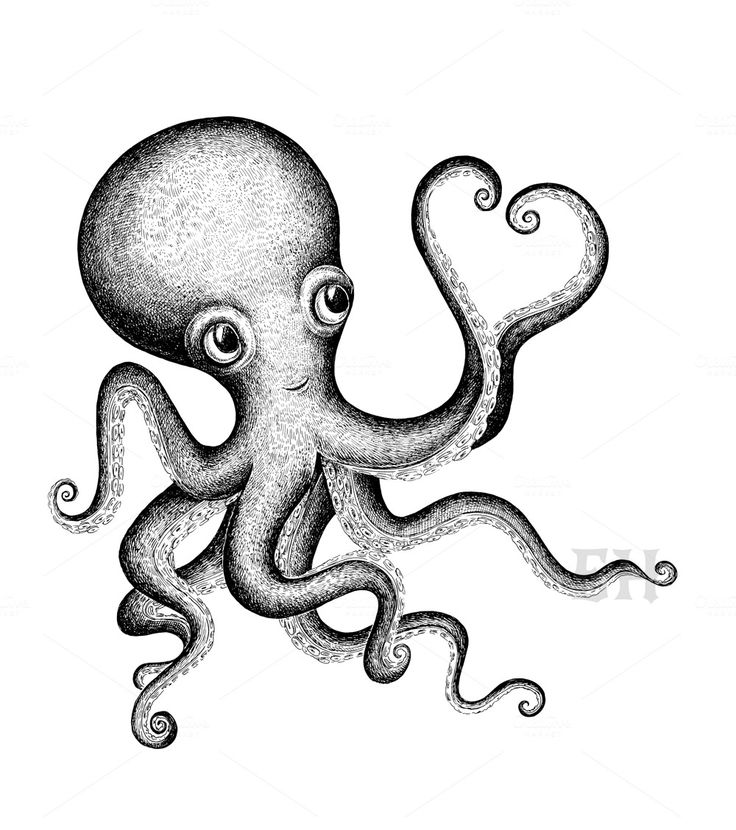 Octopus Tentacles Drawing