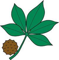 200x206 Ohio State Buckeye Leaf Drawing Buckeye Leaf Logo Creative