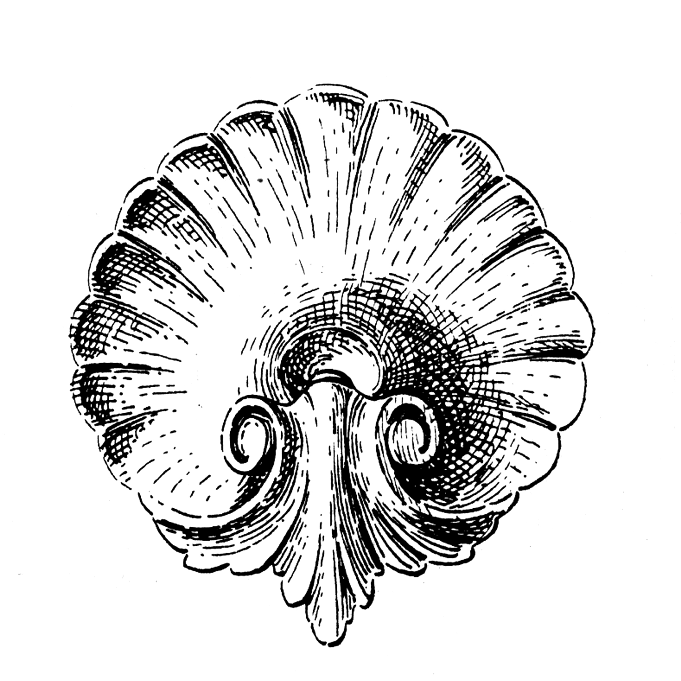 2295x2295 Ornamental Shell Clipart Images