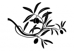 250x173 olive clipart olive plant, picture