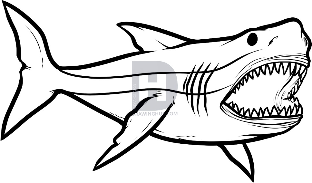 1080x633 Shark Drawing Open Mouth For Free Download