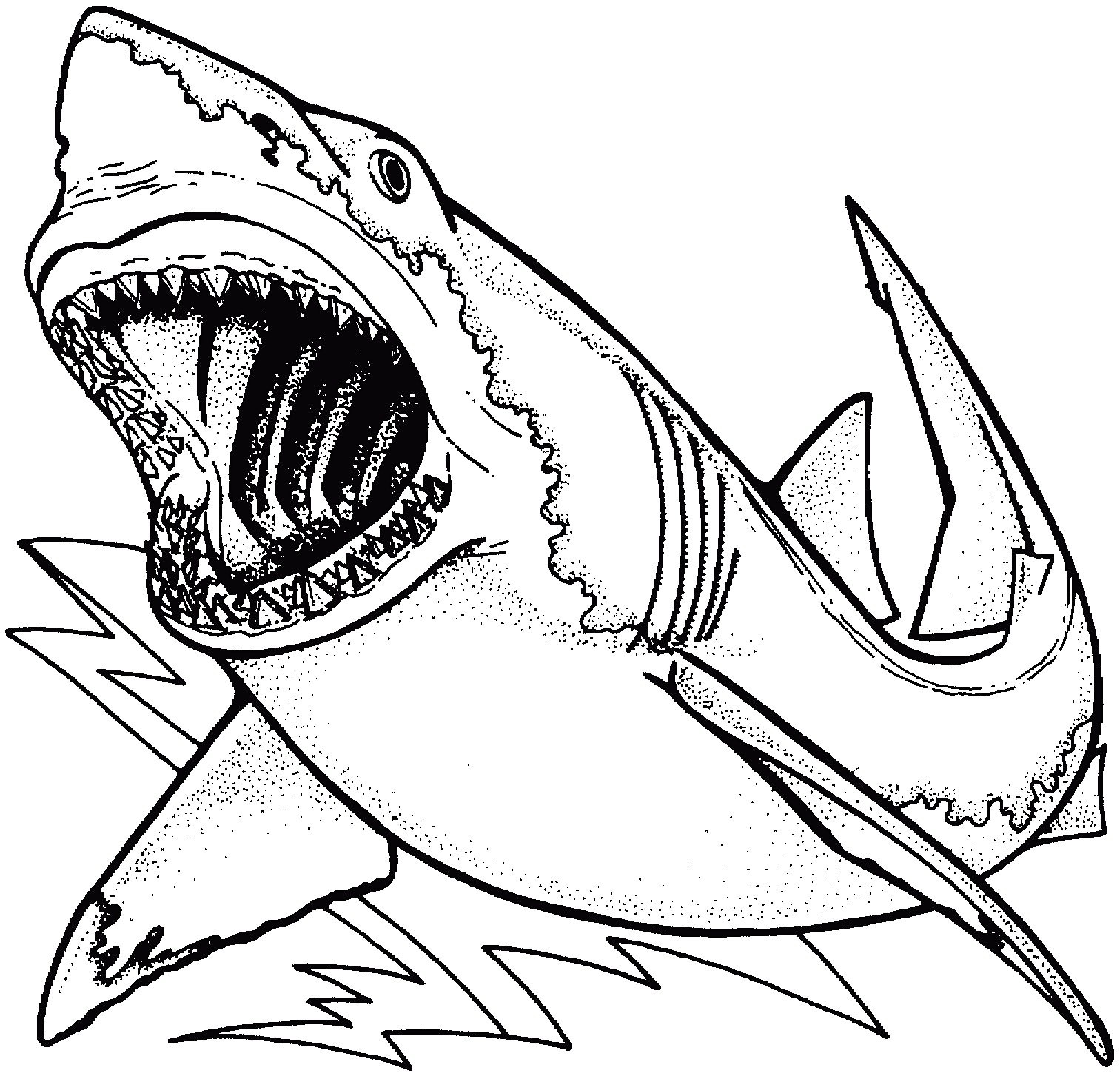 1513x1454 Drawings Of Sharks Open Mouth Archives