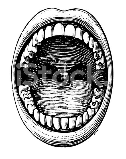 442x556 Antique Medical Illustration Depicting Open Mouth And Teeth