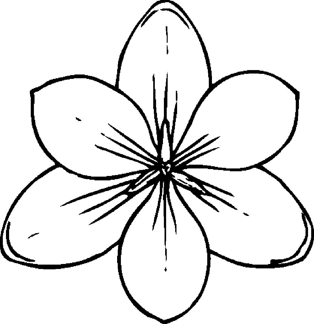 Orange Blossom Drawing