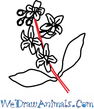 300x350 How To Draw An Orange Blossom Flower