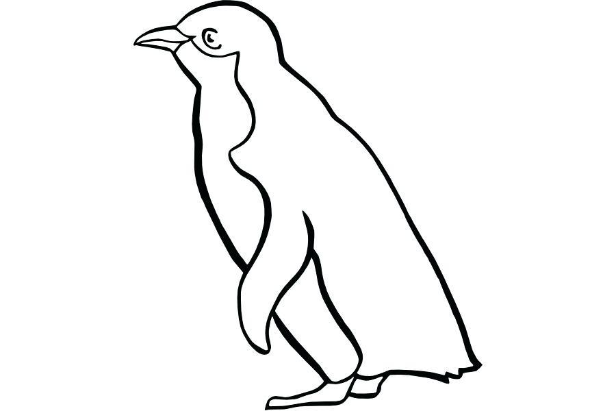 900x600 penguin drawing draw penguin penguin drawing for preschoolers