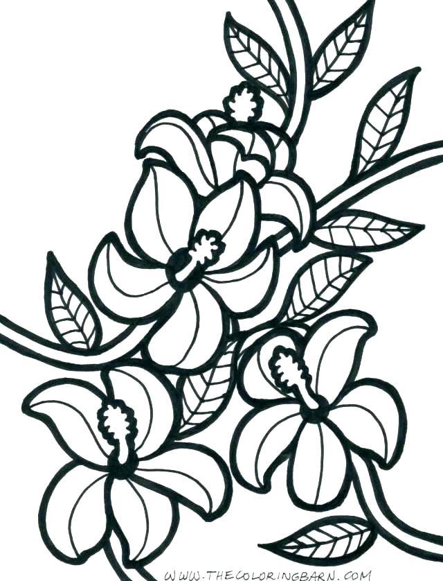 640x838 Hawaii State Tree Coloring