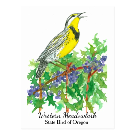 540x540 Oregon State Flower Bird Meadowlark Postcard