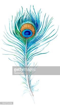 236x414 best peacock feather clipart images peacock, peacock feathers