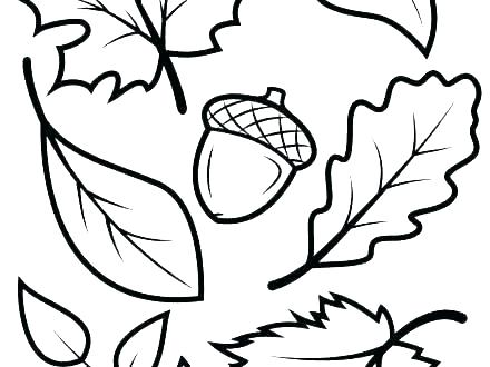 440x330 fall leaf drawing leaf outline fall leaves fall leaf cartoon