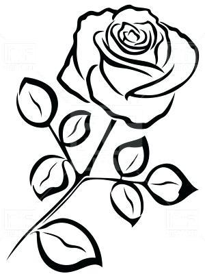 300x400 Rose Flower Outline Outline Of Rose Flower Vector Image Vector
