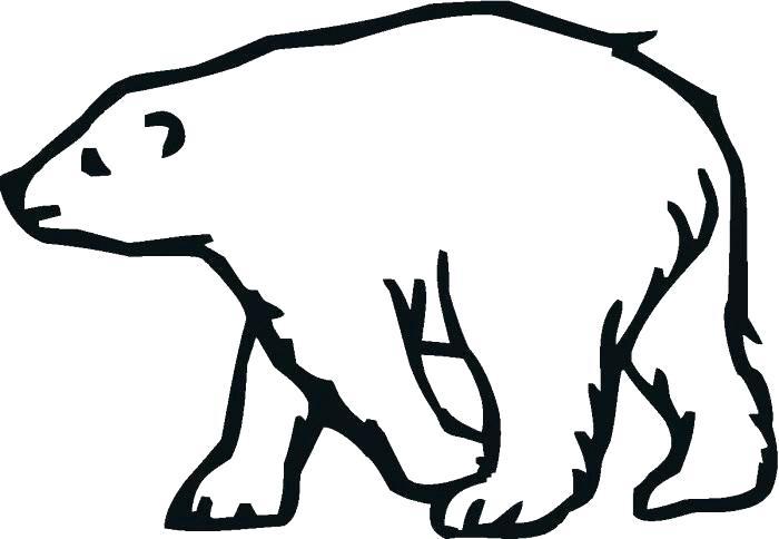 700x484 polar bear outline drawing polar bear outline of a bear license