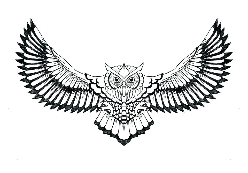 1024x716 owl drawing outline owl drawing outline abstract outline big owl