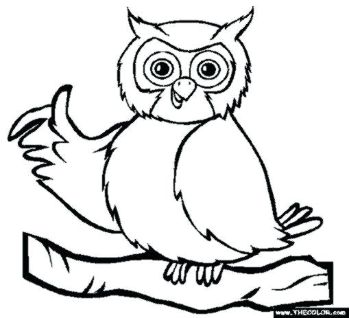 509x463 Owl Coloring