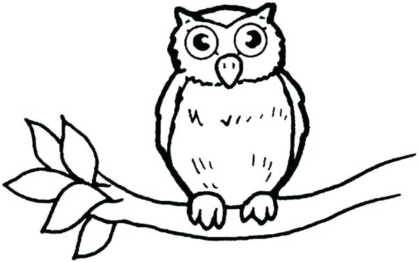 600x377 Owl For Coloring Color It Images Of Owl Coloring Pages