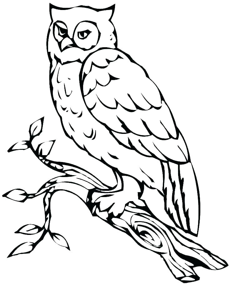 736x908 Printable Snowy Owl Coloring Pages