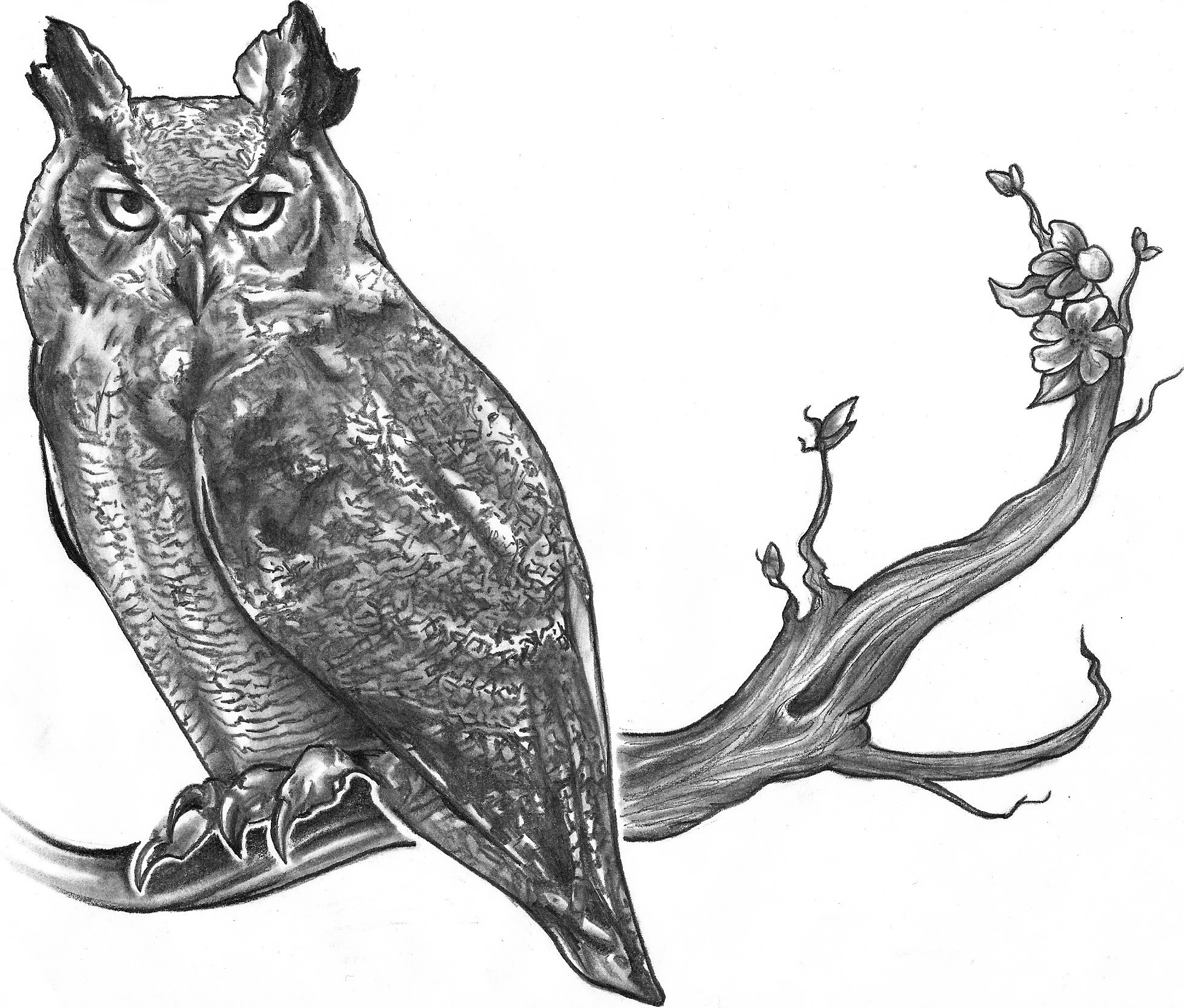 Owl On Branch Drawing
