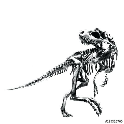 500x500 dinosaur skeleton drawing floral dinosaur drawing dinosaur