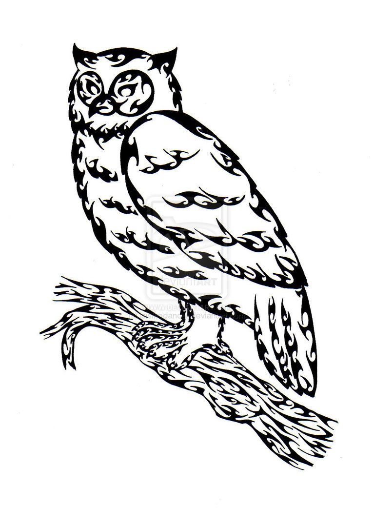 767x1041 Owl Outline Drawing