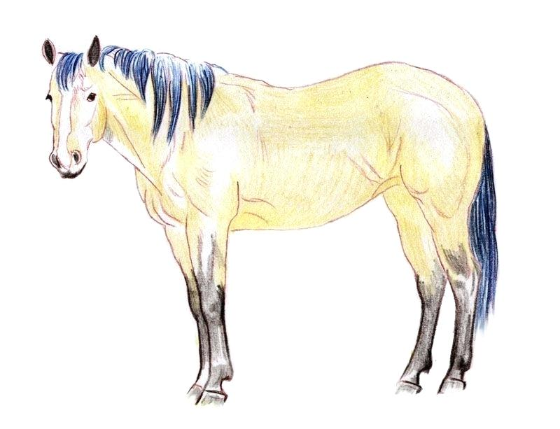 800x613 draw and paint realistic horses pdf how to draw a realistic horse