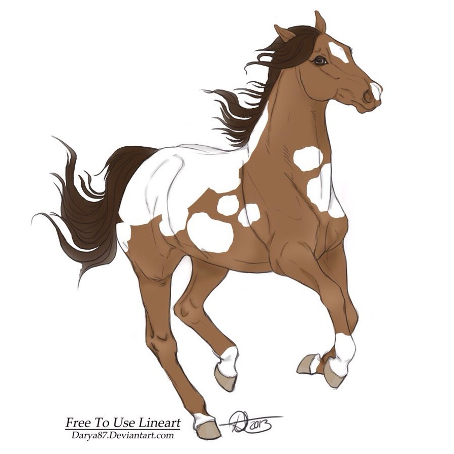 894x894 Bay Paint Horse Drawing