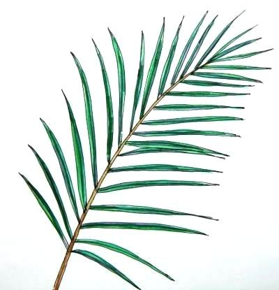 Palm Leaf Drawing | Free download on ClipArtMag