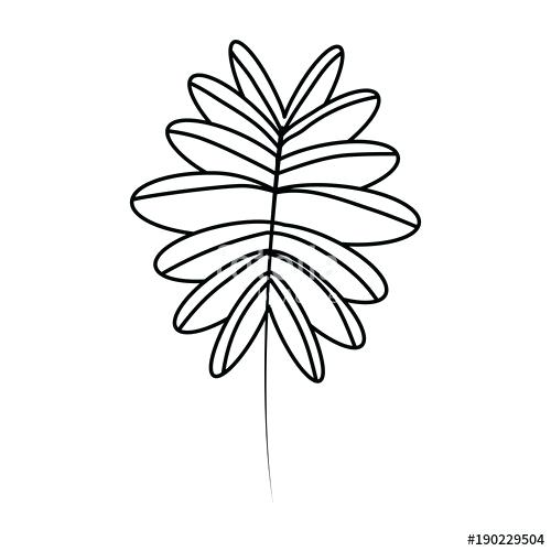 500x500 tropical palm leaves drawing in vintage stock vector of tropical