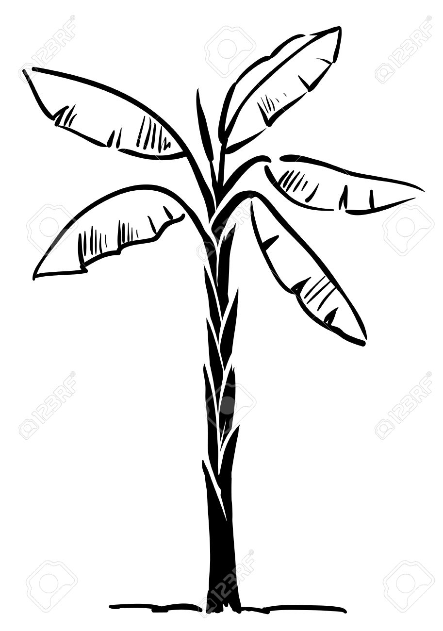 Palm Tree Drawing Easy