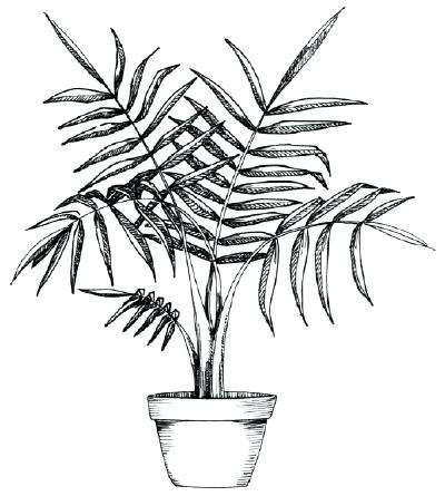 Palm Tree Drawing Outline   Free download best Palm Tree