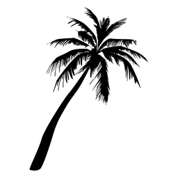 Palm Tree Drawing Png