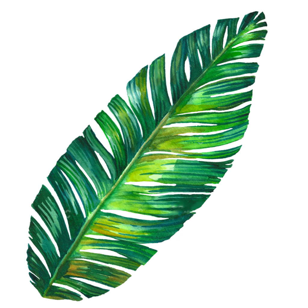 Palm Tree Drawing Tumblr   Free download best Palm Tree Drawing