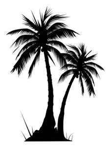 227x300 top palm tree images palm plants, palm tattoos, palm tree