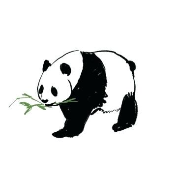 360x360 Drawn Panda Cartoon Panda Drawing Step