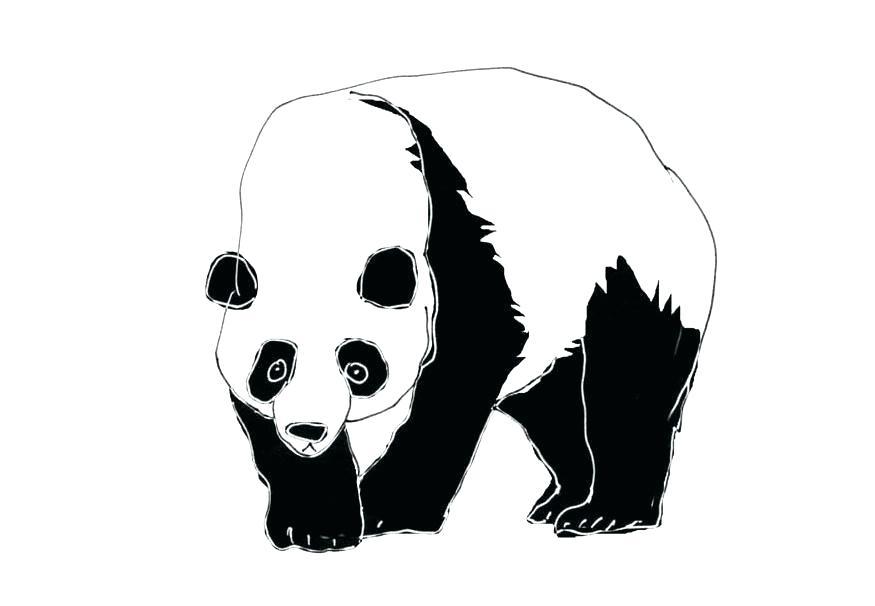 875x606 how to draw a giant panda panda drawing how to draw giant pandas