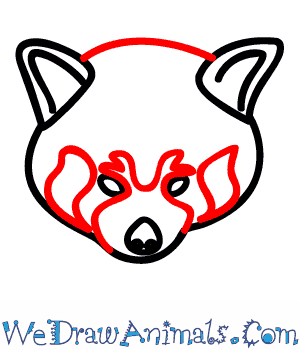 300x350 How To Draw A Red Panda
