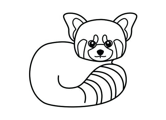 537x390 How To Draw A Red Panda Step
