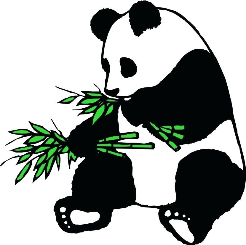 830x828 how to draw a giant panda panda drawing how to draw giant pandas