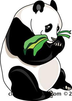 251x350 Panda Eating Bamboo Clipart