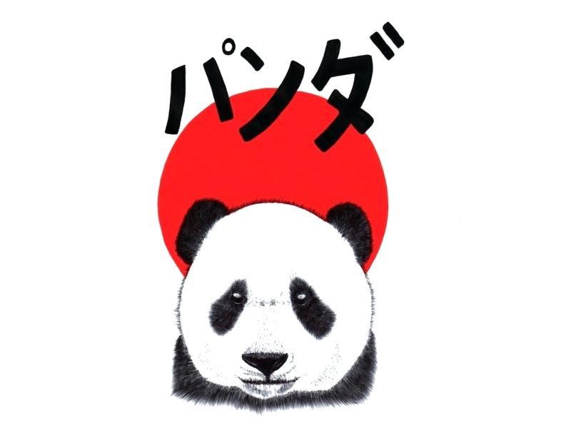 800x600 how to draw a giant panda panda drawing how to draw giant pandas