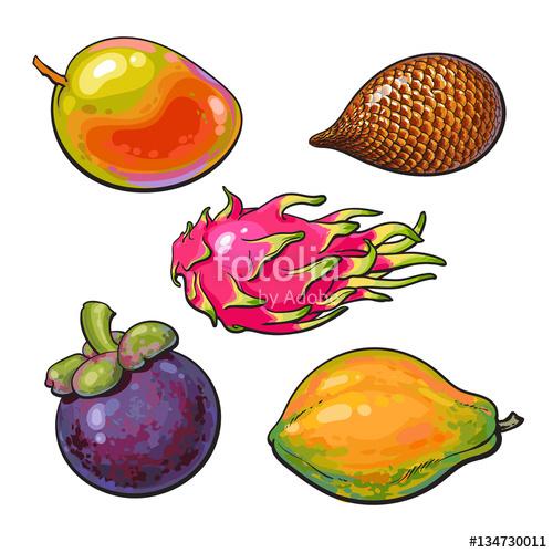 500x500 Whole Mango, Papaya, Mangosteen, Salak, Pitaya Tropical Fruit