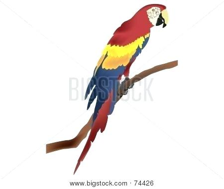 450x380 parrot draw how to draw a parrot step parrot simple drawing