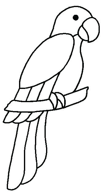 342x624 Drawing A Parrot Parrot Art Drawing Parrots