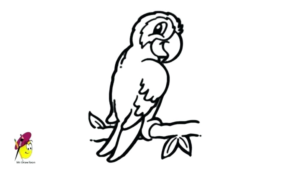 1024x576 easy to draw parrot step parrot drawing easy steps easy to draw