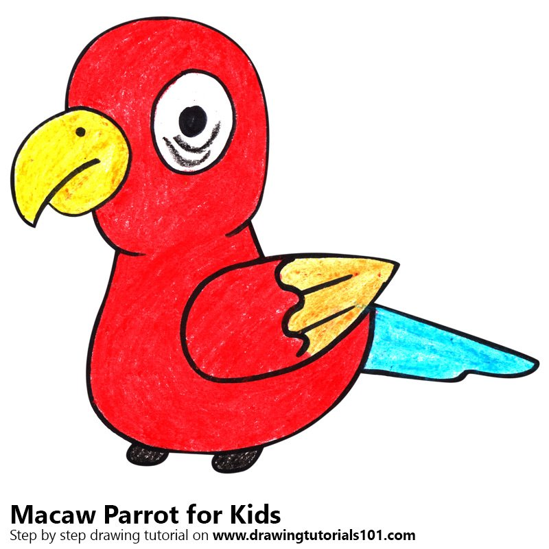 800x800 Learn How To Draw A Macaw Parrot For Kids