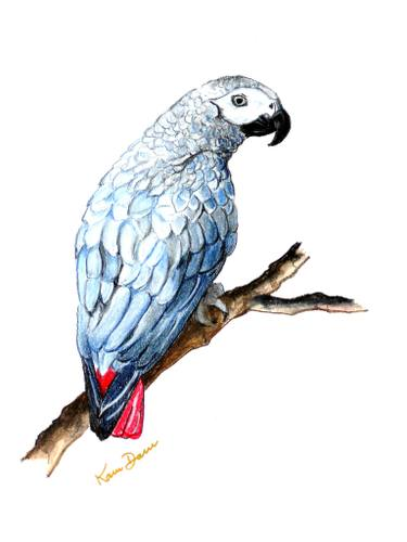 375x500 African Grey Parrot Drawing