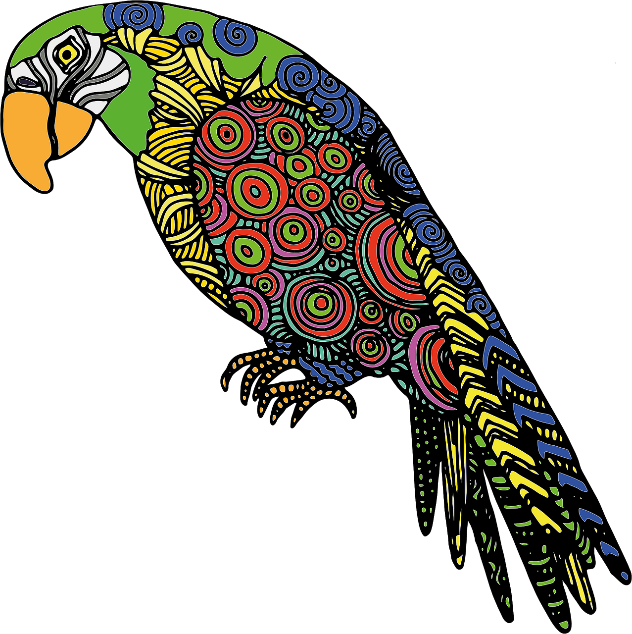 1277x1280 Parrot Bird Colored Drawing Png
