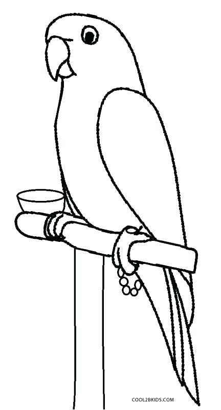 432x800 Parrot Drawing Outline At Free For Personal Use Parrot Drawing