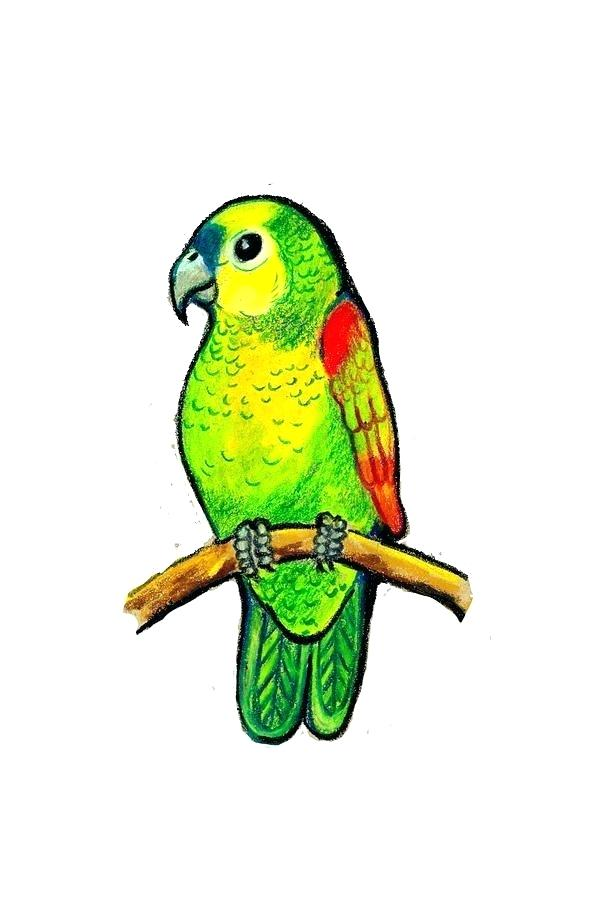 589x900 Parrot Drawing Pictures Parrot Pencil Drawing Images