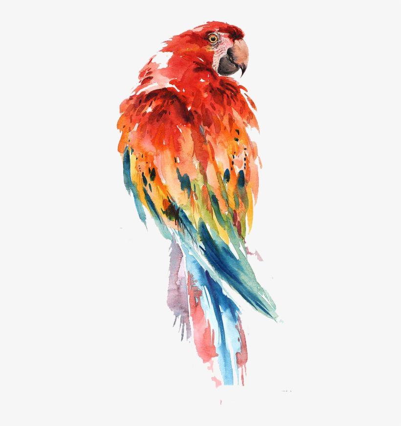 820x871 Parrot Watercolor Painting Bird Drawing Art