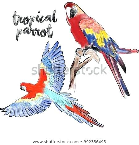 450x470 Parrots Drawing Hand Drawing Painting Parrots Beautiful Macaw